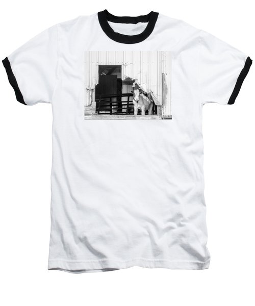 Peak-a-boo Calf Baseball T-Shirt by Dan Traun