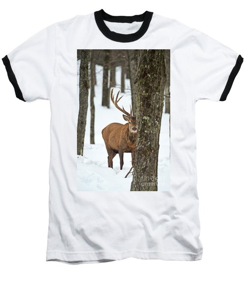 Baseball T-Shirt featuring the photograph Peekaboo.. by Nina Stavlund