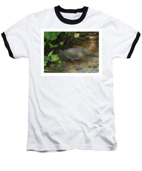 Pigeon Baseball T-Shirt by Felipe Adan Lerma