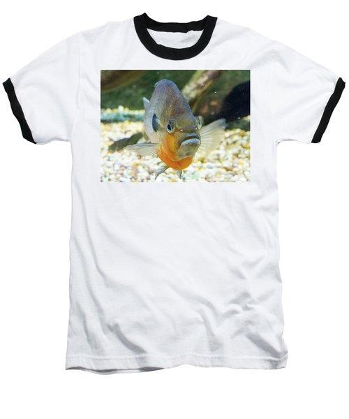 Piranha Behind Glass Baseball T-Shirt