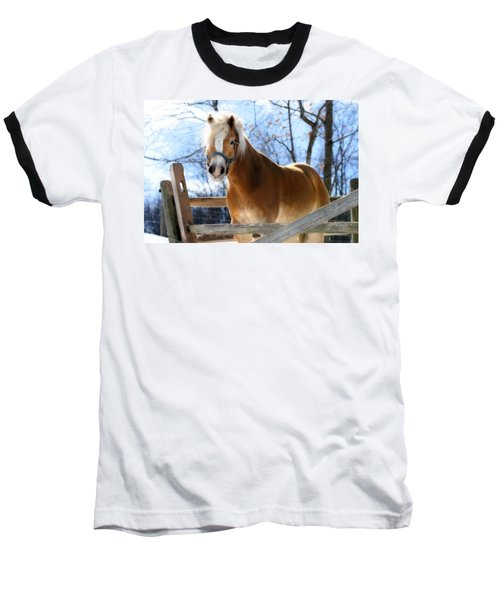 Baseball T-Shirt featuring the photograph Portrait Of A Haflinger - Niko In Winter by Angela Rath