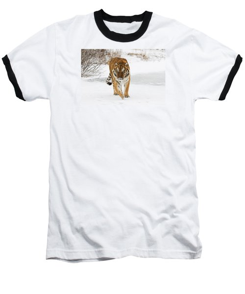 Prowling Tiger Baseball T-Shirt