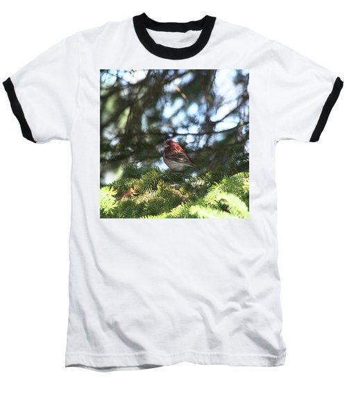 Purple Finch Baseball T-Shirt