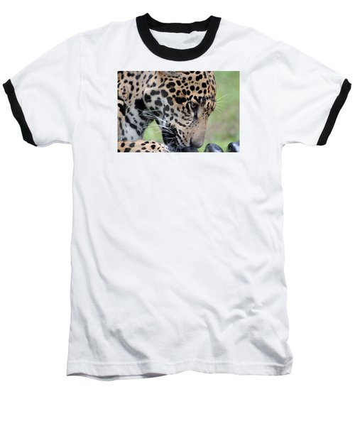 Jaguar And Toy Baseball T-Shirt