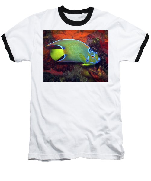 Queen Angelfish, U. S. Virgin Islands 2 Baseball T-Shirt