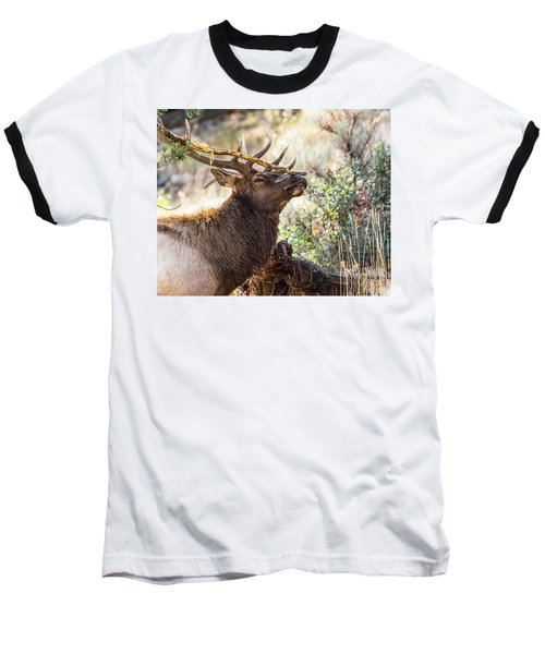 Ready For Rut Baseball T-Shirt by Yeates Photography