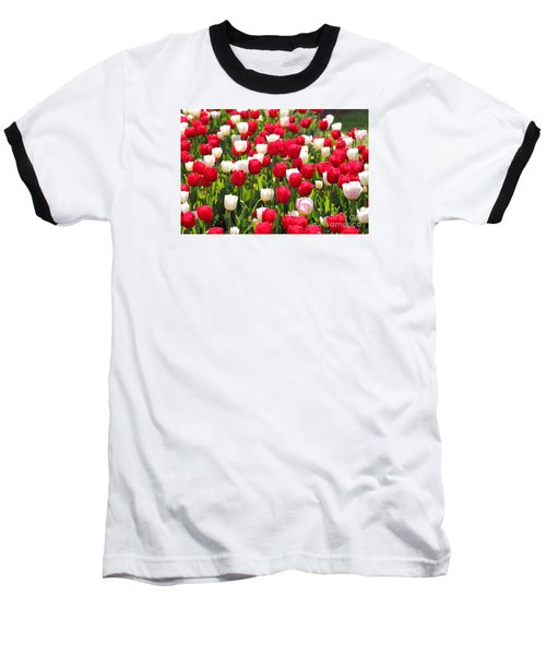 Red And White Tulips Baseball T-Shirt by Bev Conover
