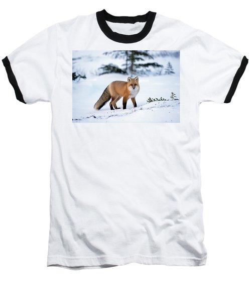 Red Fox Vulpes Vulpes Portrait Baseball T-Shirt