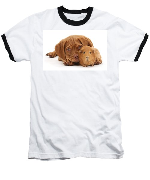 Red Guinea Pig And Dogue De Bordeaux Baseball T-Shirt