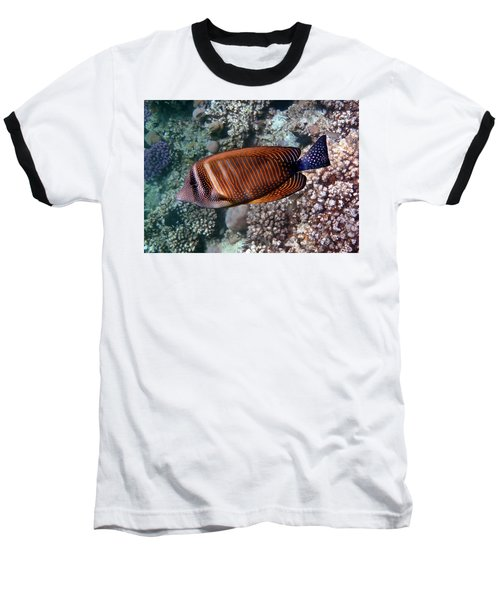 Red Sea Sailfin Tang 3 Baseball T-Shirt