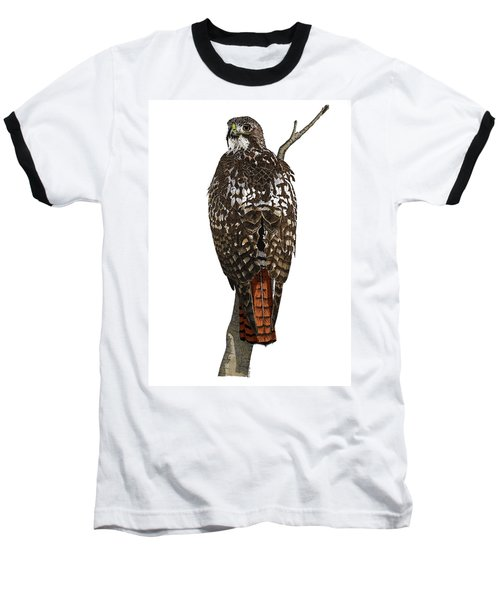 Red-tailed Hawk - Color Baseball T-Shirt