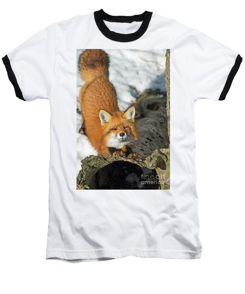 Baseball T-Shirt featuring the photograph Reynard The Fox by Nina Stavlund