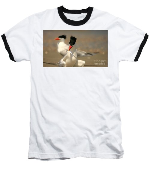 Royal Tern Catch Baseball T-Shirt