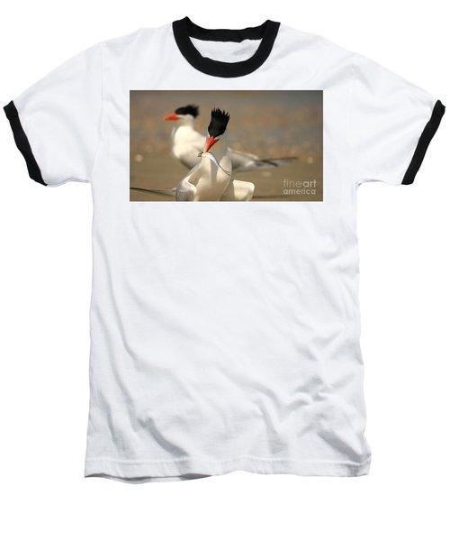 Royal Tern Catch Baseball T-Shirt