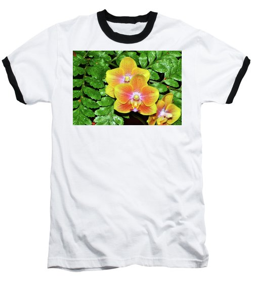 Sara Gold Orchids 003 Baseball T-Shirt by George Bostian