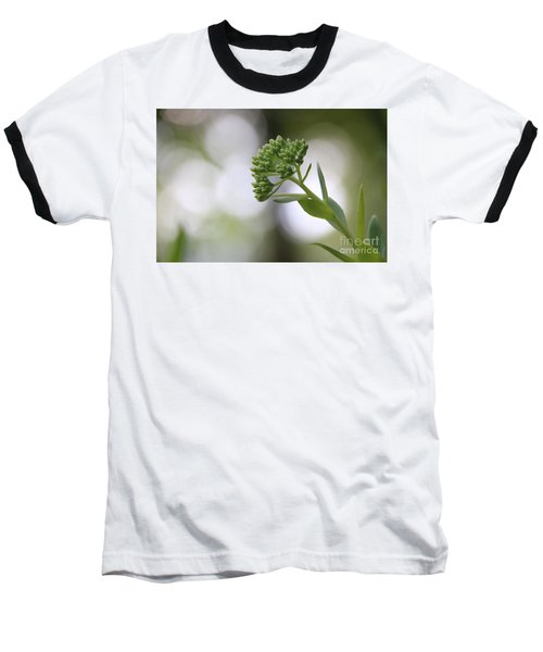 Sedum Buds At Late Evening Baseball T-Shirt by Marilyn Carlyle Greiner