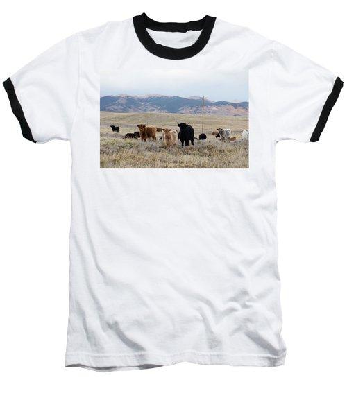 Shaggy-coated Cattle Near Jefferson Baseball T-Shirt