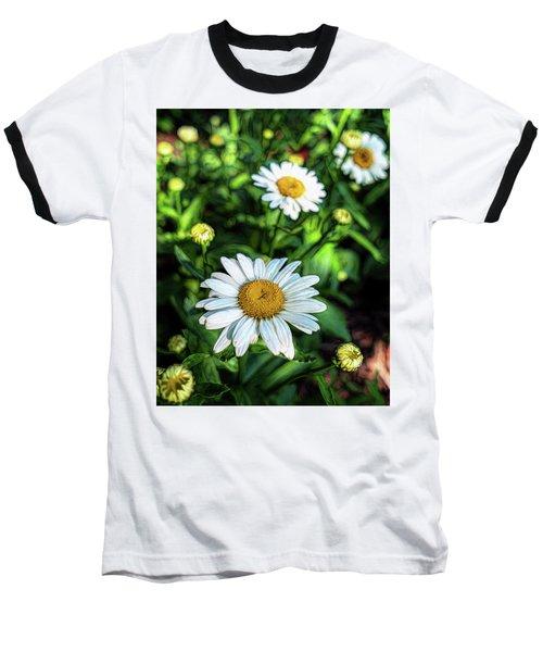 Shasta Daisy Baseball T-Shirt by Robert FERD Frank