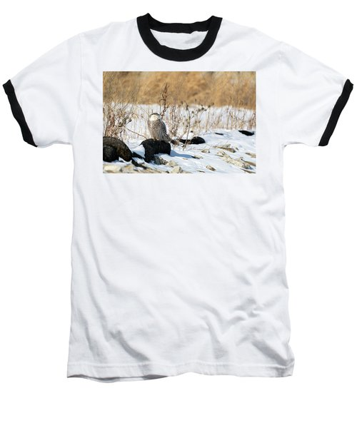 Sitting Snowy Baseball T-Shirt