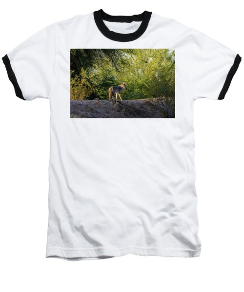 Sleepy Coyote Baseball T-Shirt