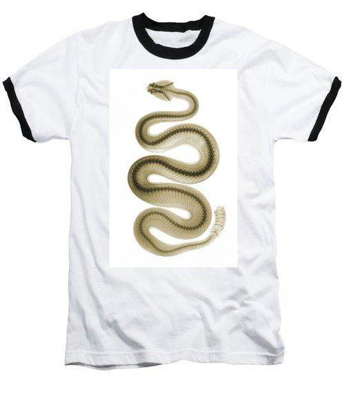 Southern Pacific Rattlesnake, X-ray Baseball T-Shirt