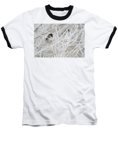Spotted Towhee In Winter Baseball T-Shirt