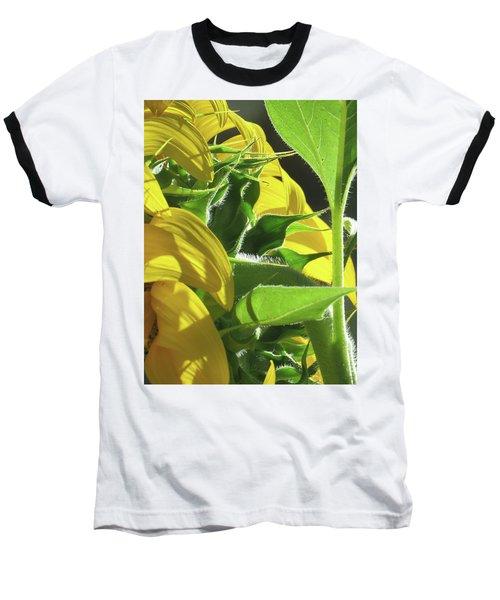 Sunshine In The Garden 18 Baseball T-Shirt by Brooks Garten Hauschild
