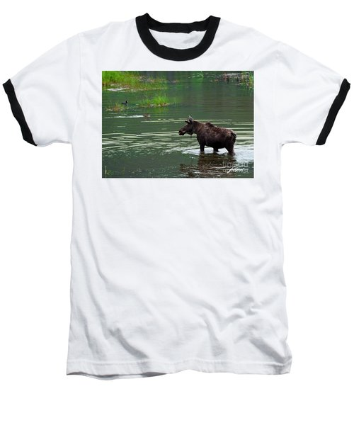 young Moose in spring pond Baseball T-Shirt