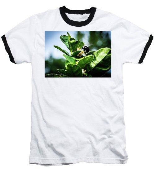 Sweet Bee Baseball T-Shirt by Stefanie Silva