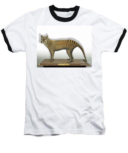 Tasmanian Tiger-thylacinus Cynocephalus-tasmanian Wolf-lobo De Tasmania-tasmanian Loup-beutelwolf    Baseball T-Shirt