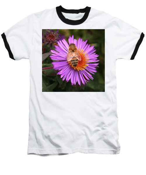 The Aster And The Bee Baseball T-Shirt by Laurel Talabere