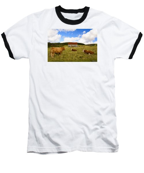 The Cows Of Mabou Baseball T-Shirt by Ken Morris