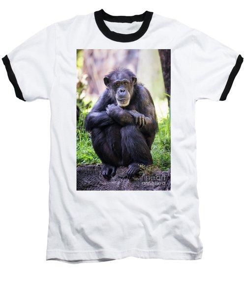 Thoughtful Chimpanzee  Baseball T-Shirt by Stephanie Hayes