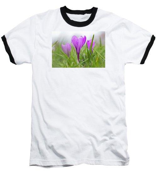 Three Glorious Spring Crocuses Baseball T-Shirt