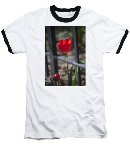 Tulip And Garden Fence Baseball T-Shirt by Morris  McClung