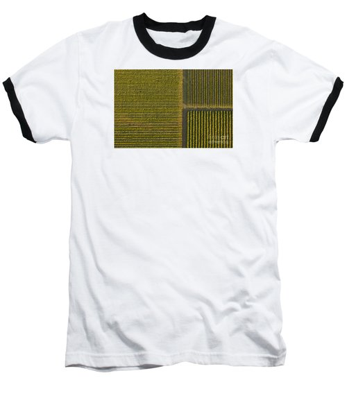 Vineyard From Above Baseball T-Shirt by Diane Diederich