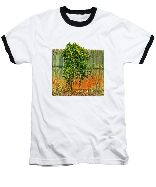 Wall Of Jasmine Baseball T-Shirt by Larry Bishop