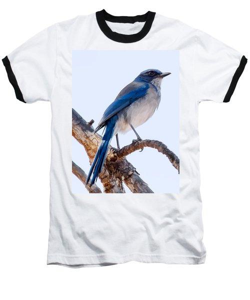 Western Scrub-jay Baseball T-Shirt