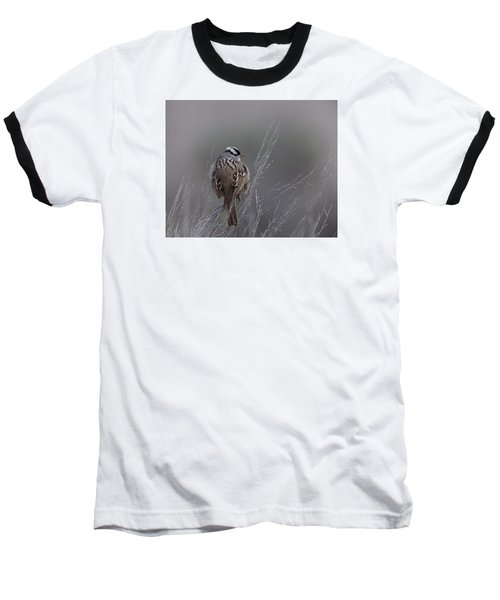 White-crowned Sparrow Baseball T-Shirt