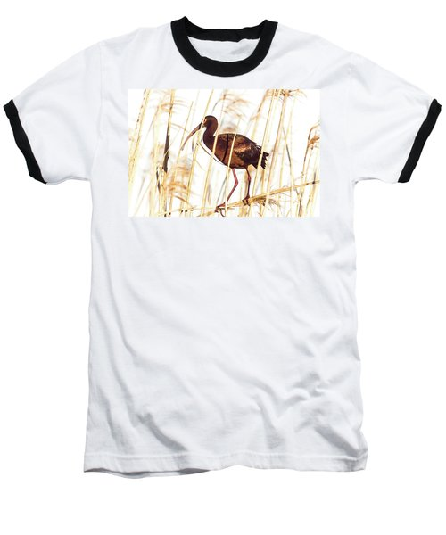 White Faced Ibis In Reeds Baseball T-Shirt by Robert Frederick