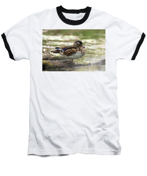 Wood Duck Hen Baseball T-Shirt