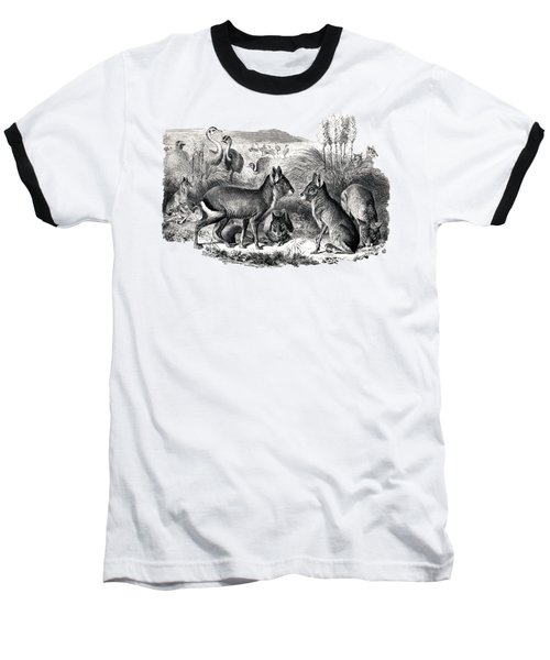woodcut drawing of South American Maras Baseball T-Shirt by The one eyed Raven