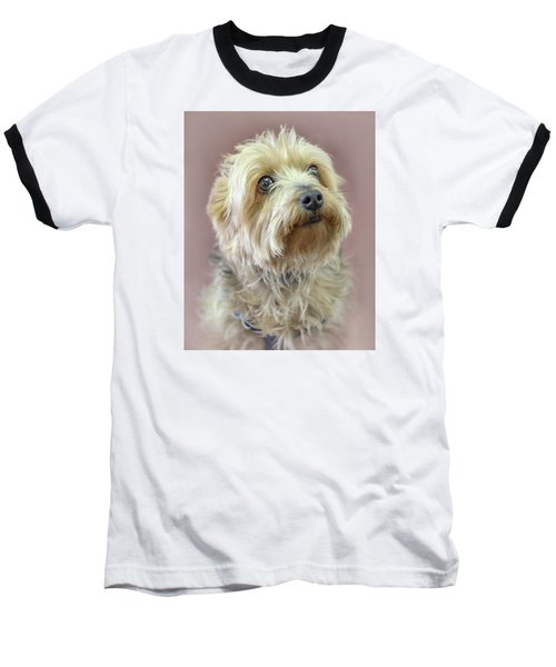 Baseball T-Shirt featuring the photograph Yorkshire Terrier by Marion Johnson
