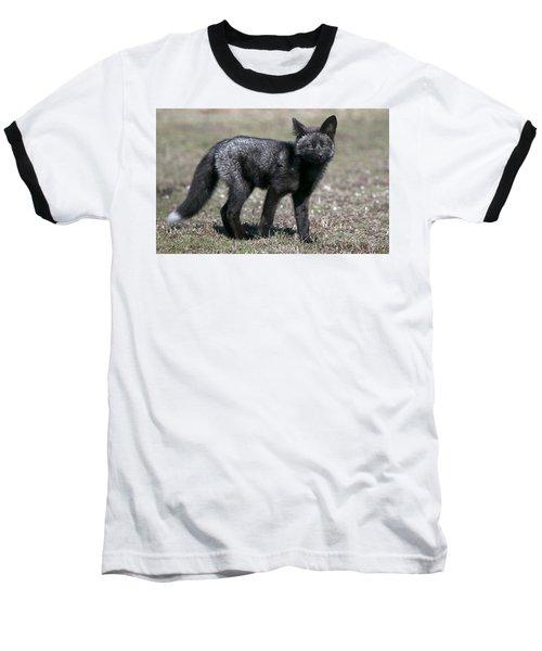 Baseball T-Shirt featuring the photograph Curious by Elvira Butler