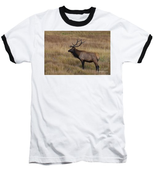 Young Buck Baseball T-Shirt