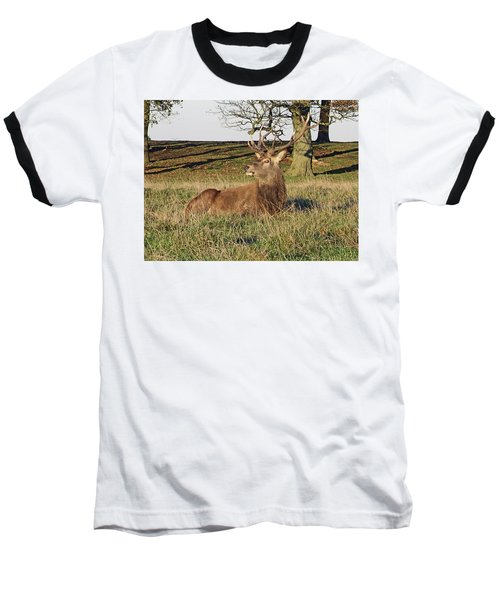 28/11/18  Tatton Park. Stag In The Park. Baseball T-Shirt