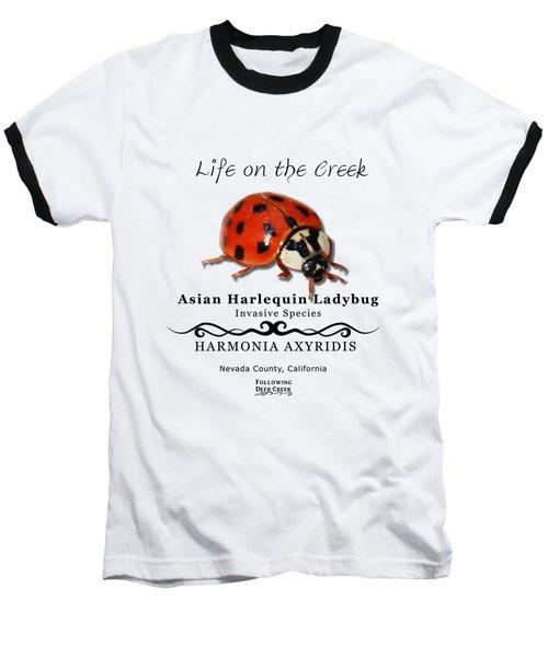 Asian Harlequin Ladybug Baseball T-Shirt