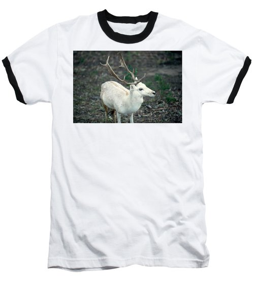 Buck Baseball T-Shirt