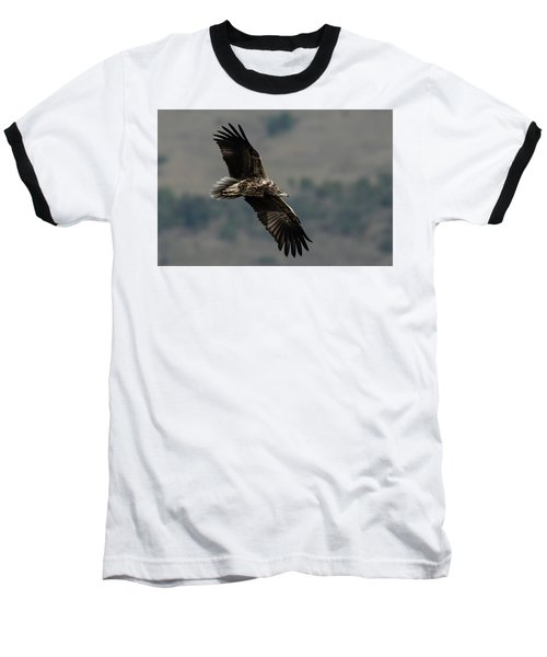 Egyptian Vulture, Sub-adult Baseball T-Shirt