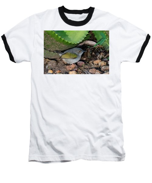 Gray-backed Camaroptera Baseball T-Shirt